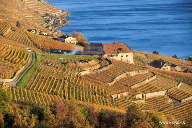 Tourisme    Tourisme    Les Vignobles de Lavaux