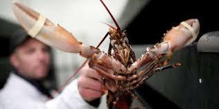 Écologie  Écologie  En Suisse, les homards vivants ne doivent plus être précipités dans l'eau bouillante